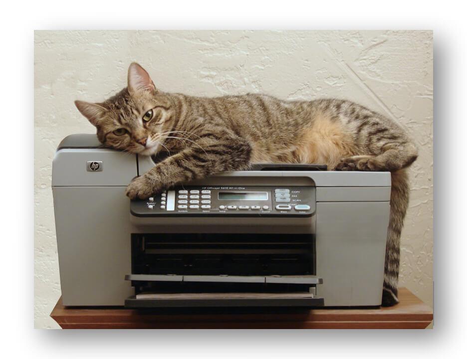 """สำนวน """"Copy Cat"""" : แมวขี้ค้อปปี้?"""